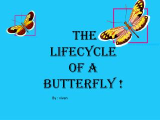 The lifecycle of a butterfly !
