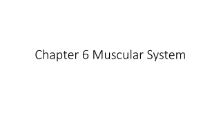 Chapter 6 Muscular System