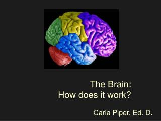 The Brain: How does it work?