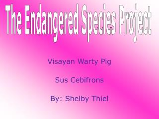 Visayan Warty Pig Sus Cebifrons By: Shelby Thiel