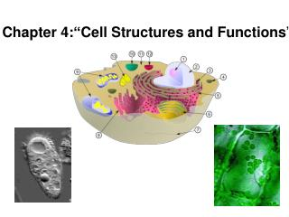 "Chapter 4: "" Cell Structures and Functions """