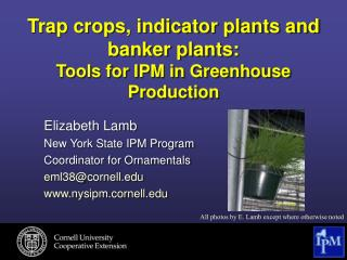 Trap crops, indicator plants and banker plants: Tools for IPM in Greenhouse Production
