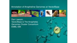 Annotation of Anopheline Genomes at VectorBase