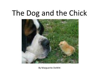 The Dog and the Chick