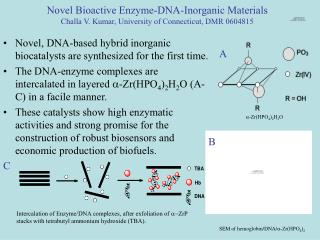 Novel, DNA-based hybrid inorganic biocatalysts are synthesized for the first time.