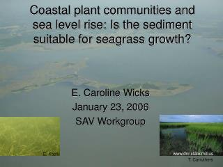 Coastal plant communities and sea level rise: Is the sediment suitable for seagrass growth?