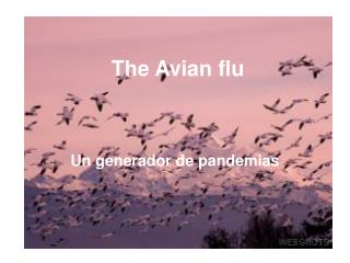 The Avian flu