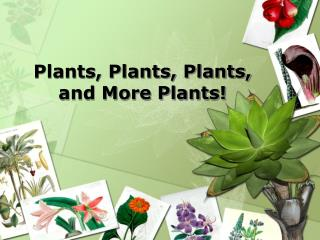 Plants, Plants, Plants, and More Plants!