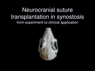 Neurocranial suture transplantation in synostosis  from experiment to clinical application