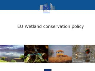 EU Wetland conservation policy