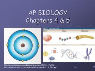 AP BIOLOGY Chapters 4 & 5