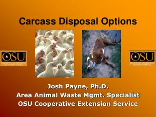 Carcass Disposal Options
