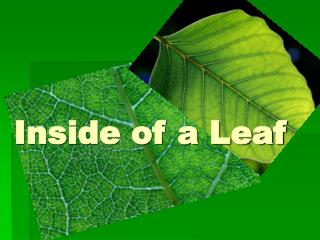 Inside of a Leaf