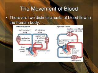 The Movement of Blood