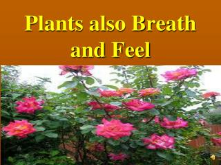 Plants also Breath and Feel