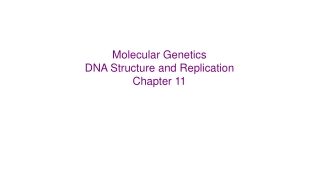 Molecular Genetics DNA Structure and Replication Chapter 11