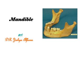Mandible  BY:                  DR.Yahya Alfarra