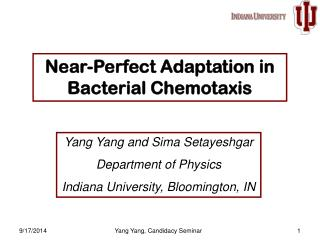 Near-Perfect Adaptation in Bacterial Chemotaxis