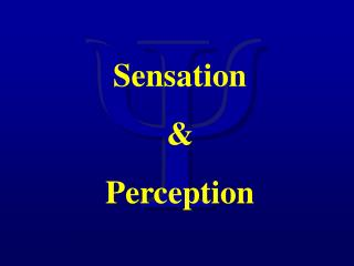 Sensation  Perception