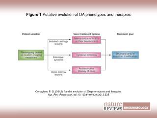 Figure 1 Putative evolution of OA phenotypes and therapies