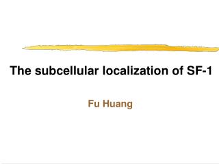 The subcellular localization of SF-1