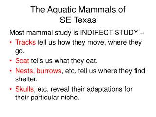The Aquatic Mammals of  SE Texas