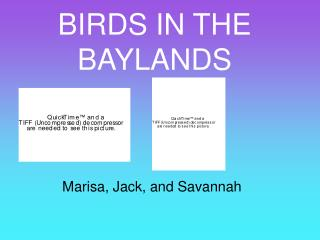 BIRDS IN THE BAYLANDS