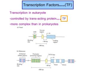 Transcription Factors … (TF)