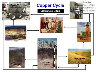 Copper Cycle