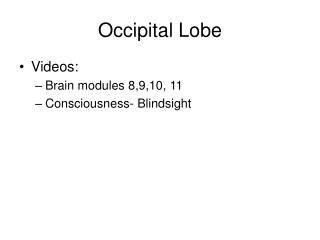 Occipital Lobe