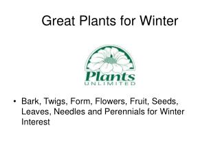 Great Plants for Winter