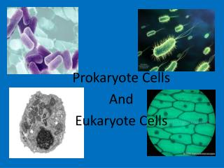 Prokaryote Cells  And  Eukaryote Cells