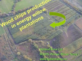 Wood chips production in energy willow plantations
