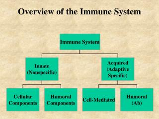 Overview of the Immune System