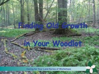Finding Old Growth  in Your Woodlot