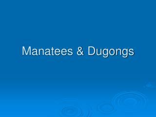 Manatees & Dugongs