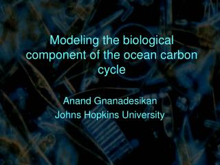 Modeling the biological component of the ocean carbon cycle