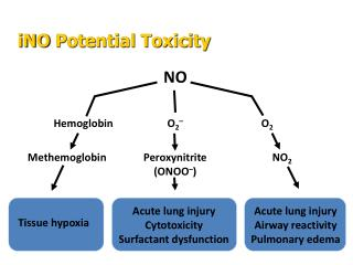 Acute lung injury Cytotoxicity Surfactant dysfunction