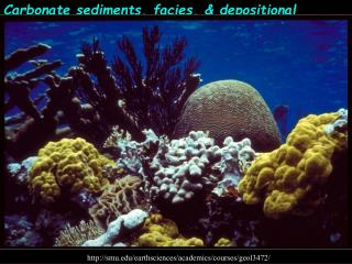 Carbonate sediments, facies, & depositional 							environments