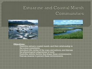 Estuarine and Coastal Marsh Communities