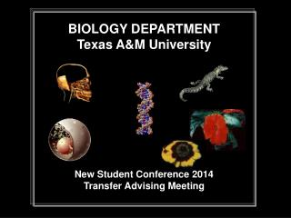 BIOLOGY DEPARTMENT Texas A&M University New Student Conference 2014 Transfer Advising Meeting