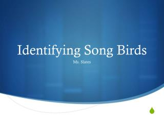 Identifying Song Birds