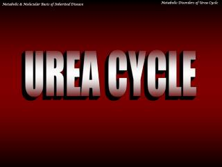 UREA CYCLE