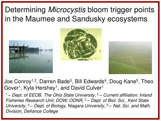 Determining  Microcystis  bloom trigger points in the Maumee and Sandusky ecosystems