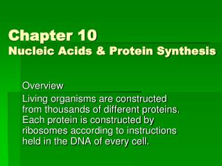 Chapter 10 Nucleic Acids & Protein Synthesis