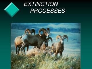 EXTINCTION                   PROCESSES