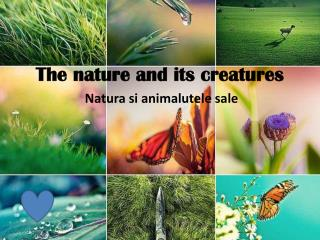 The nature and its creatures