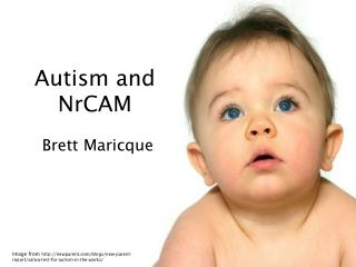 Autism and NrCAM