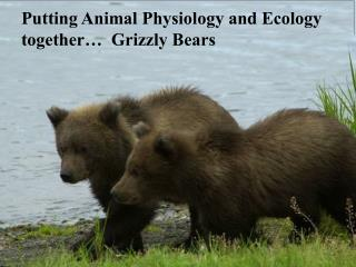 Putting Animal Physiology and Ecology together…  Grizzly Bears