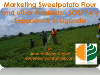 Marketing  Sweetpotato  Flour and other Products:  SOSPPA's Experience in  Uganda BY